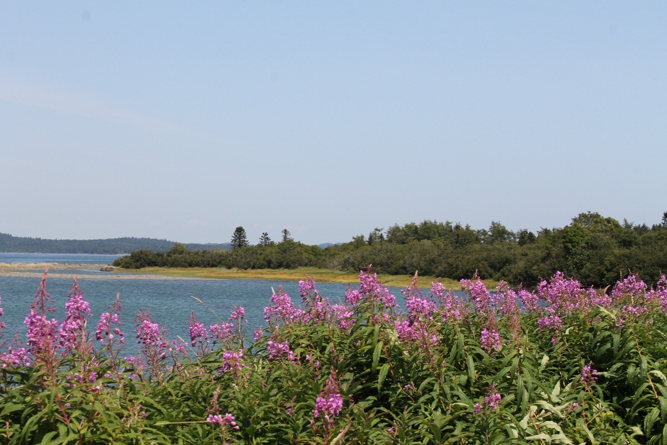 On the way to Quoddy Head State Park.