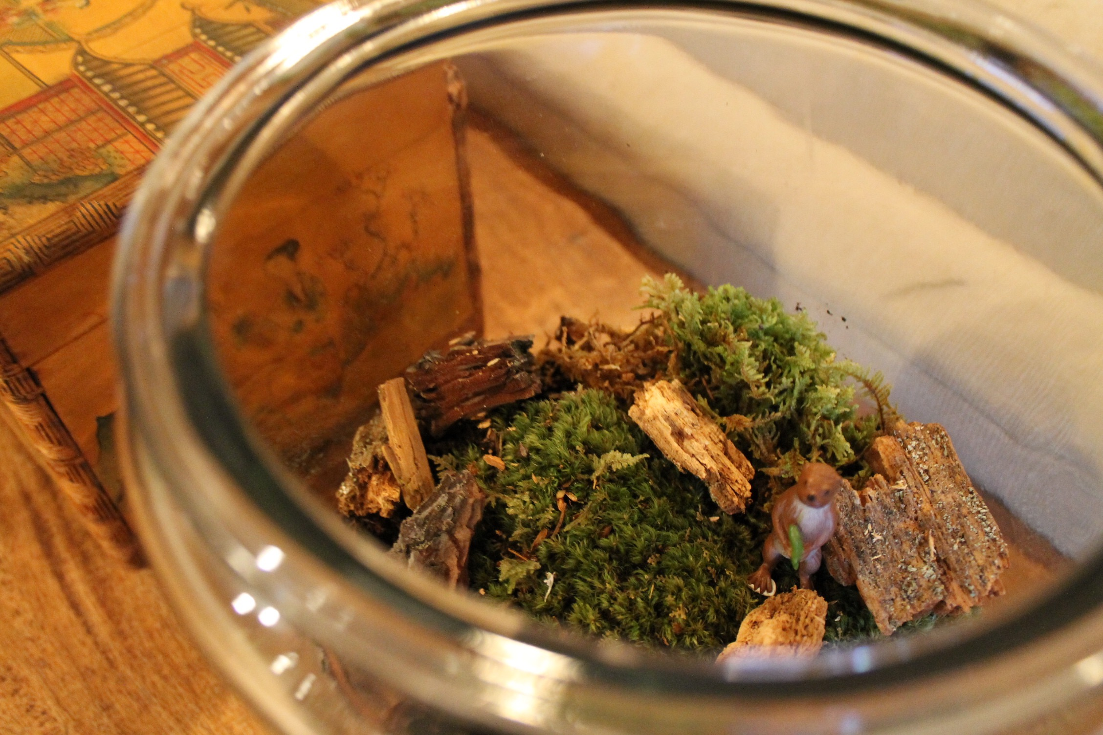 A peek inside our new terrarium!