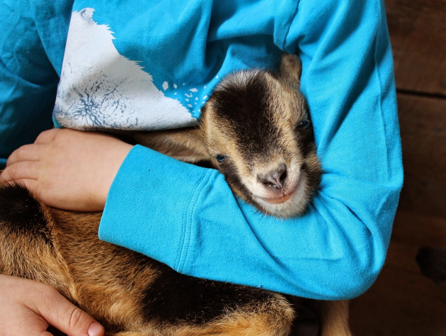goatbaby
