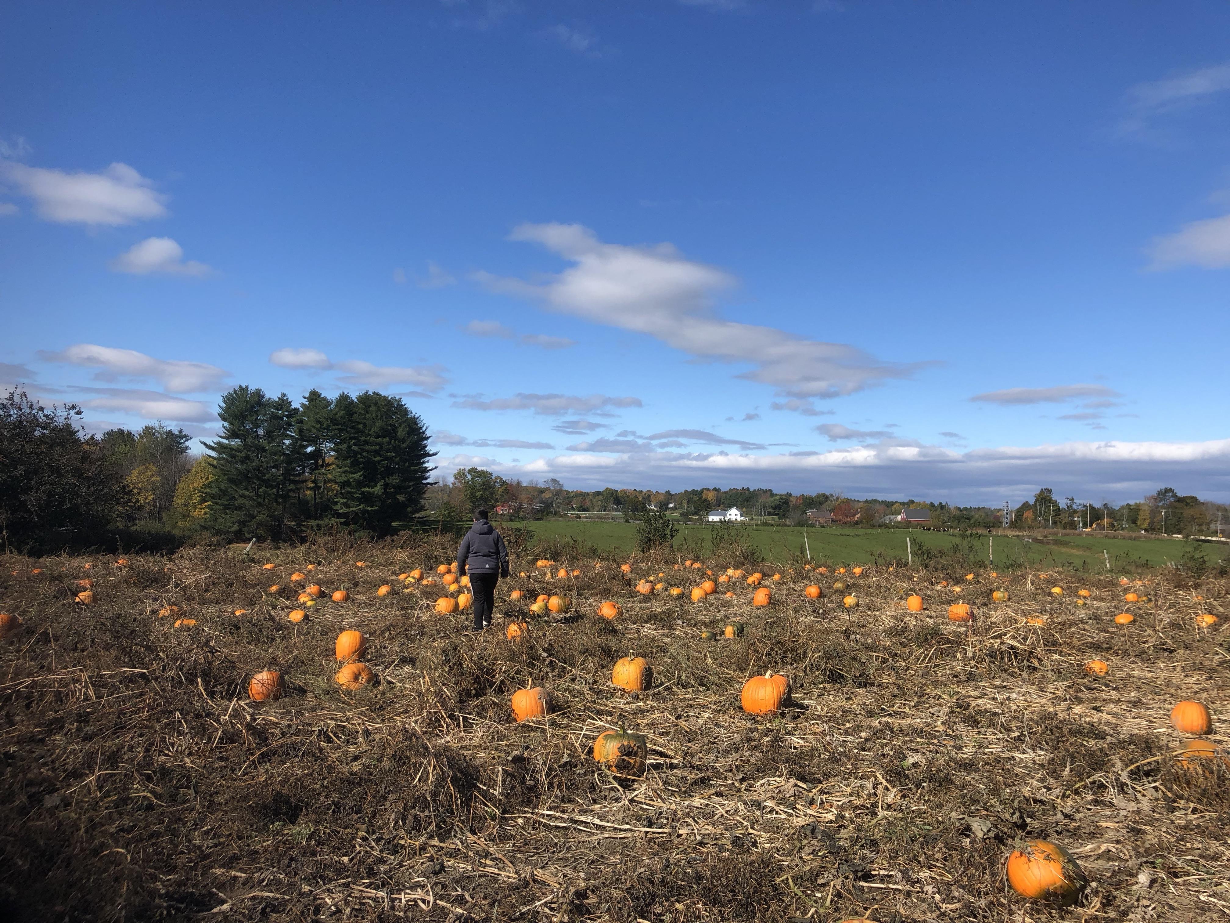 w-pumpkins